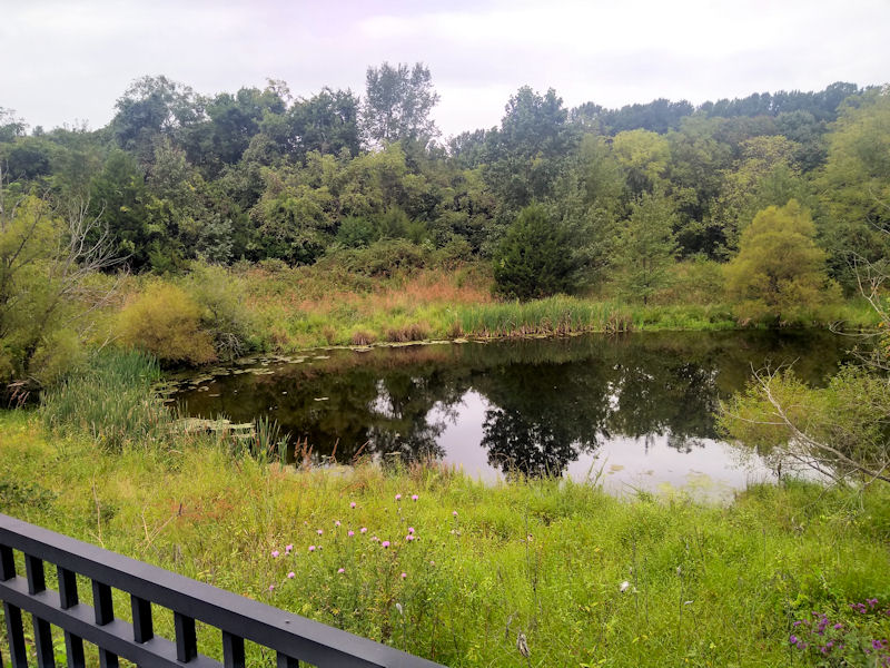 Pond @ LFCC Trailhead