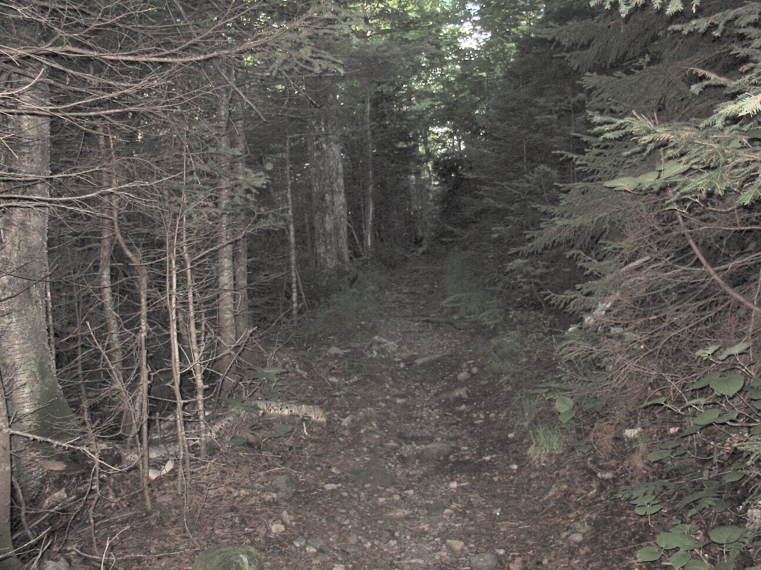 Climbing Old Jackson RD Trail, NH