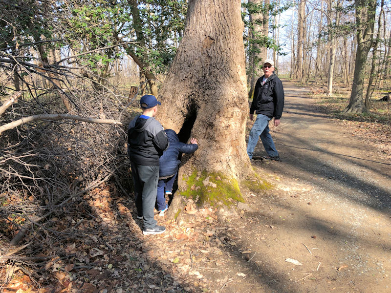 Tom, Austin, and Colton inspect the tunnel tree