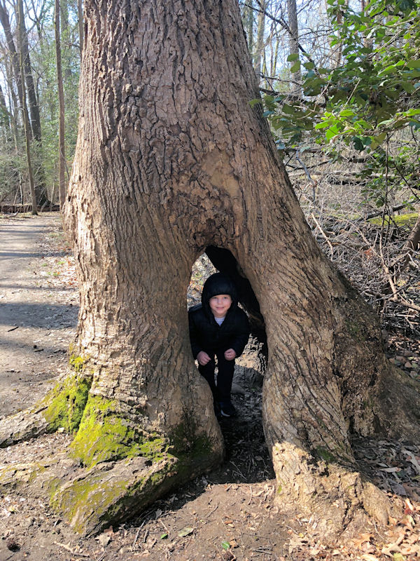 Colton peeks out from inside the tunnel tree