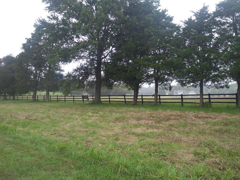 Horses next to battlefield