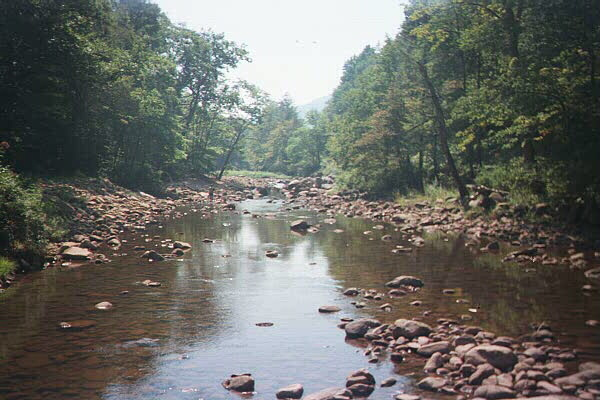 Fishing the Williams River