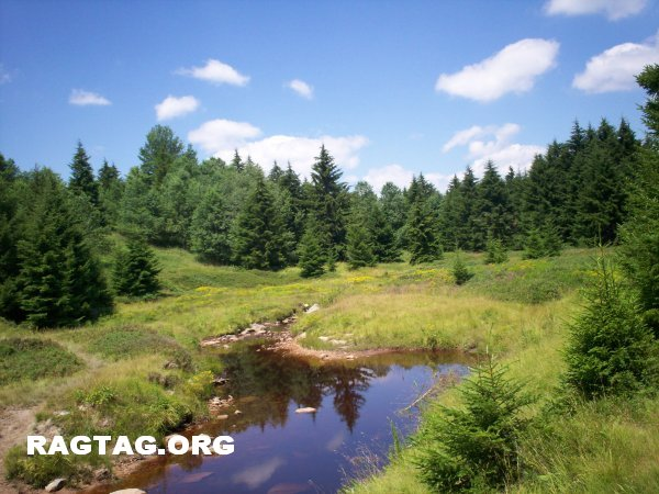 Tannin laced creek in Dolly Sods North