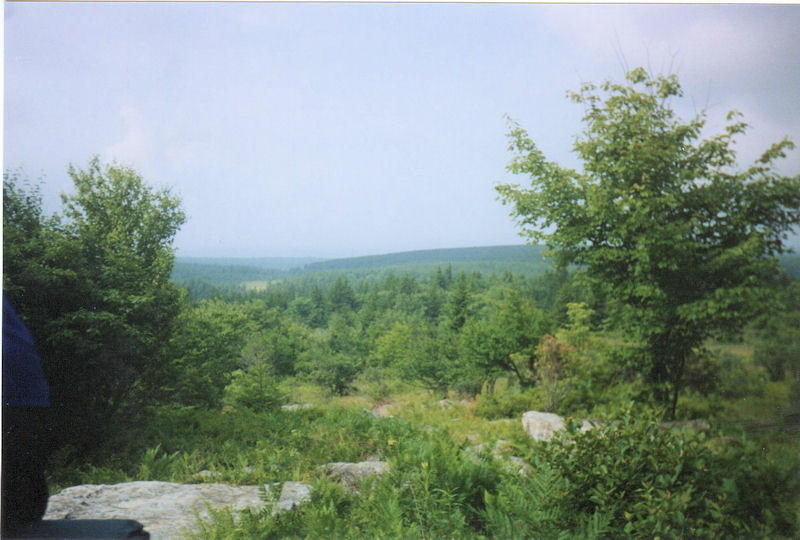 View within Dolly Sods North Area