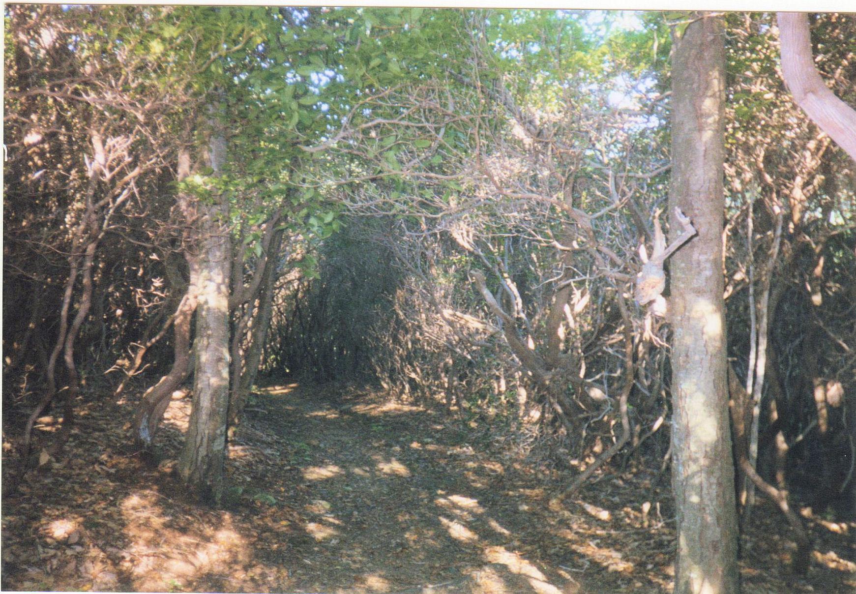 Jones Mountain Trail, VA