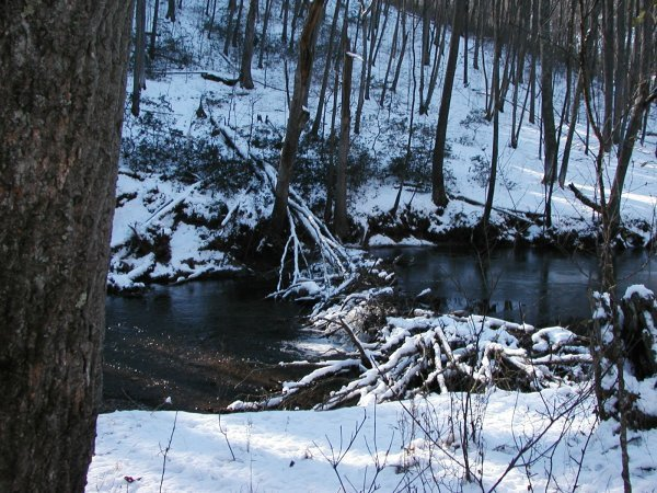 Beaver dam along Gunpowder Falls