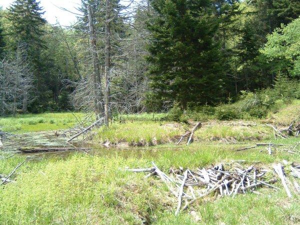 Beaver dam views
