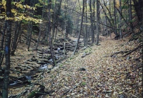 Along the Buck Run Trail, VA