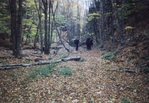 Along the Locust Springs Trail, VA