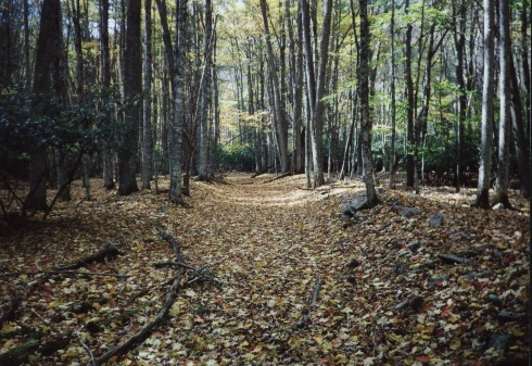 Along the Laurel Fork Trail, VA