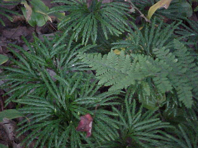 Ferns and flora