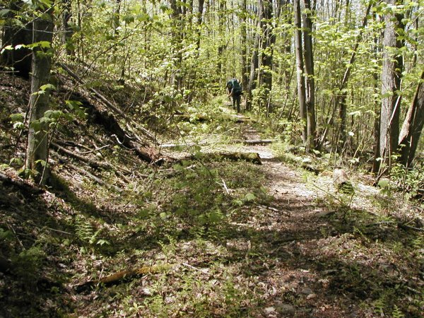 Hiking the Moore Run Trail