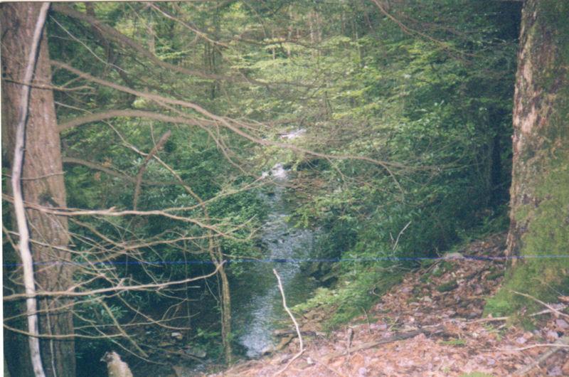 Stream along Ramseys Draft Trail