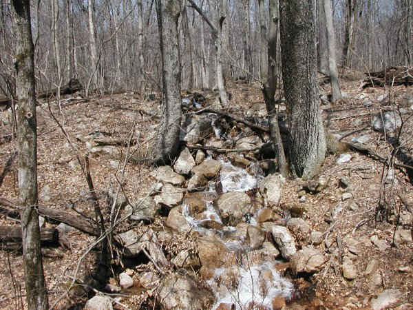 One of many springs along the trail.