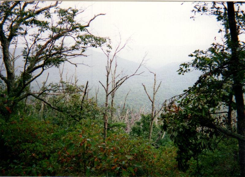 View from Short Mountain, VA