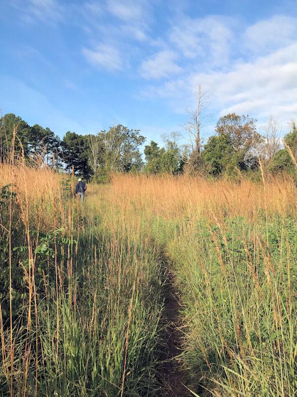 Trail needs maintenance